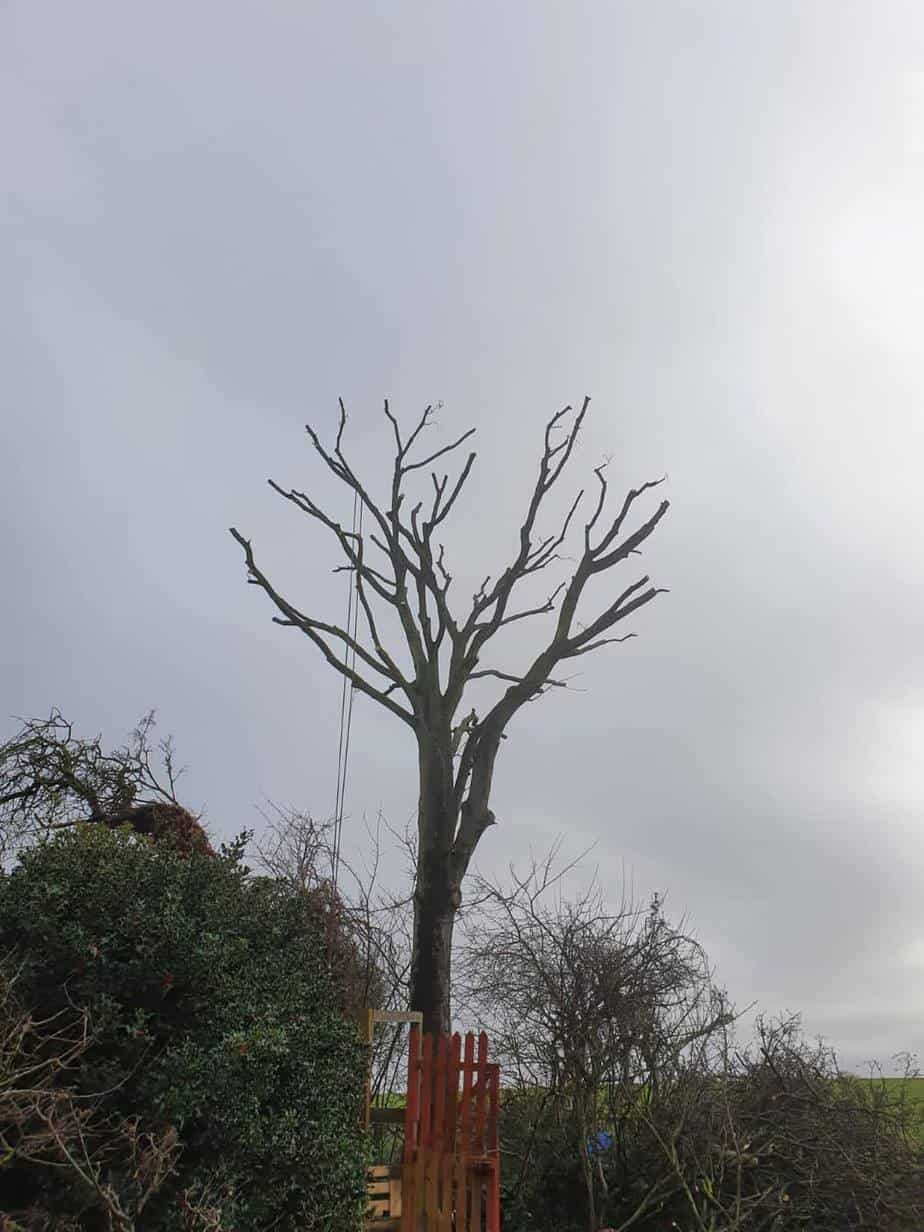 tree removal after