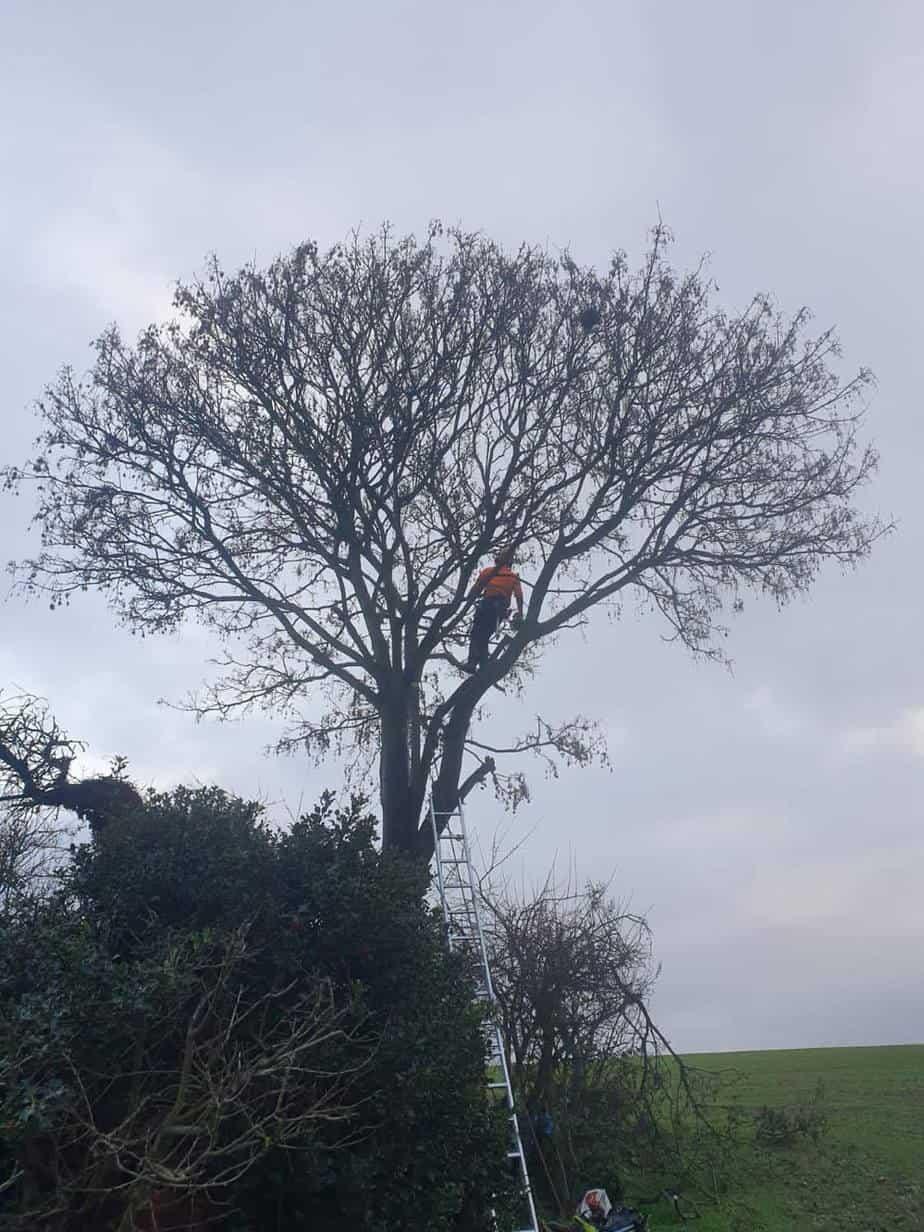 tree reduction before