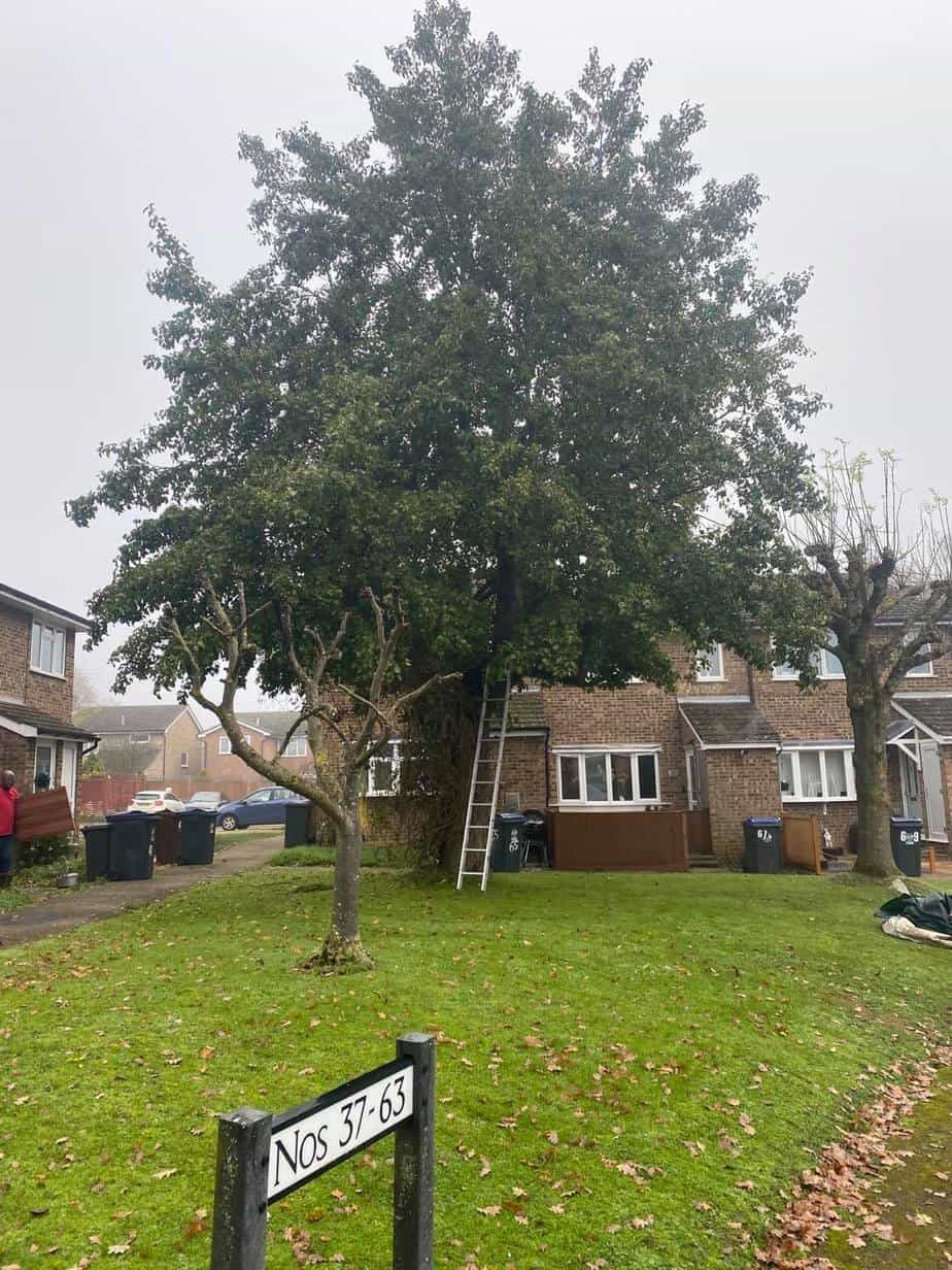 tree surgeons in hitchin tree removal before