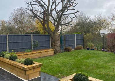 tree surgery hitchin after