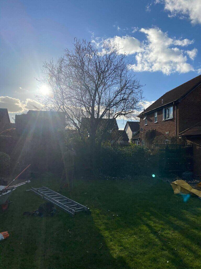 garden with trees and sunlight in background