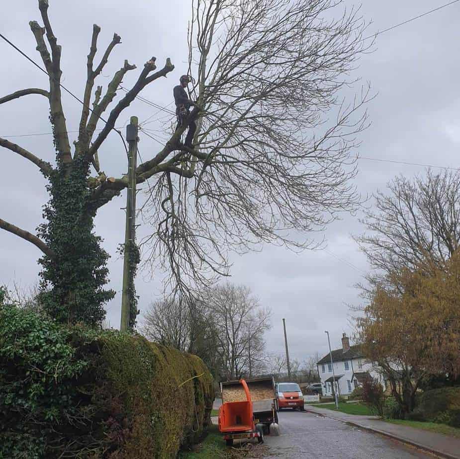 tree surgeons at work in Stevenage