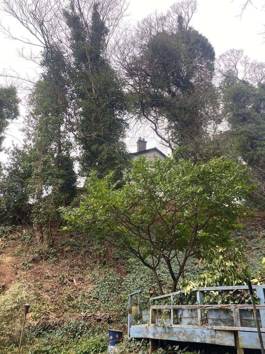 Tree Surgeons Hertford